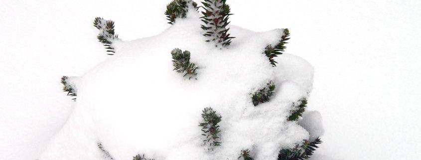 weihnachtsbaum selbst schlagen eventagentur festmacher. Black Bedroom Furniture Sets. Home Design Ideas